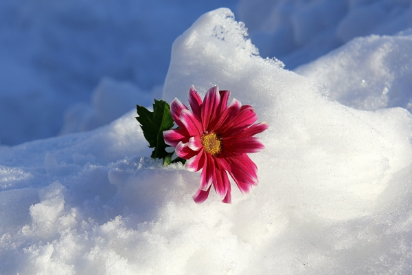 زمستانی باید تا بهاری