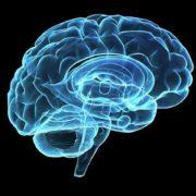 کتاب مغز : داستان شما